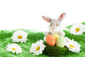 Funny easter bunny Royalty Free Stock Photo