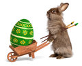 Funny Easter bunny rabbit with a wheelbarrow and a green Easter Royalty Free Stock Photography