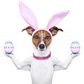 Funny easter dog Stock Photography