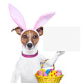 Funny easter dog Stock Images
