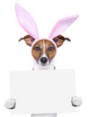 Funny Easter Dog With Blank Sp...