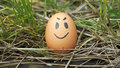Funny egg in the nature Royalty Free Stock Image