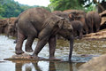 Funny elephant baby in water Stock Photography