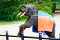 Funny elephant with orange cloth on her back greeting people Royalty Free Stock Photo