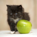 Funny fluffy black and white kitten an apple Stock Image
