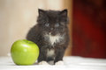 Funny fluffy black and white kitten an apple Stock Photo