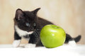 Funny fluffy black and white kitten an apple Royalty Free Stock Images