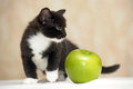 Funny fluffy black and white kitten an apple Stock Photography