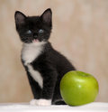 Funny fluffy black and white kitten an apple Royalty Free Stock Image