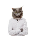 Funny fluffy cat in a glasses collage on a white businessman Stock Image