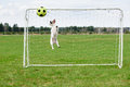 Funny football keeper stops kick into goal at high jump Royalty Free Stock Photo