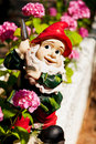 Funny Garden Gnome Royalty Free Stock Images