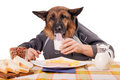 Funny German Shepherd dog with human arms and hands, drinking milk