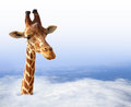 Funny giraffe with coming out of the clouds Stock Photography