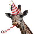 Funny giraffe party animal making a silly face and blowing a noisemaker with red white striped birthday hat horn the is Stock Image