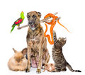 Funny group of diverse animals. isolated on white background