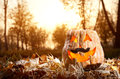 Funny halloween pumpkin in the forest glowing inside with black moustache autumn Stock Image