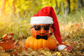 Funny Halloween. Pumpkin in sunglasses in the forest. Royalty Free Stock Photo