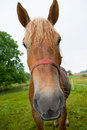Funny horse is looking in to the camera Royalty Free Stock Photography