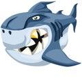 Too bad shark Royalty Free Stock Photo