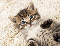 Funny kitten in carpet Royalty Free Stock Image