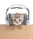 Funny kitten cat in headphones in cardboard box isolated on white Royalty Free Stock Image