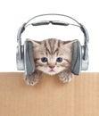 Funny kitten cat in headphones in cardboard box Royalty Free Stock Photo