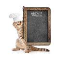 Funny kitten in cook hat holding menu blackboard Stock Photos