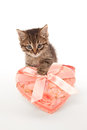 Funny kitten with gift box heart shaped Stock Photos