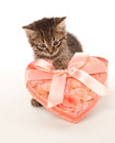 Funny kitten with gift box heart shaped Royalty Free Stock Photo
