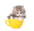 Funny kitten in large cup licking paw. isolated on white Royalty Free Stock Photo