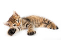 Funny kitten playing little tabby in a pose Royalty Free Stock Images