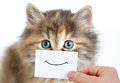 Funny kitten portrait with smile on card paper Royalty Free Stock Image