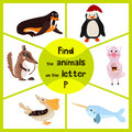 Funny learning maze game, find all 3 cute wild animals with the letter P, Arctic penguin, sea bird Pelican and domestic pigs. Educ Royalty Free Stock Photo