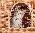 Funny little kitten inside wicker cat house Royalty Free Stock Photography