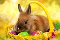 Funny little rabbit among easter eggs in basket greeting card with bunny Stock Images