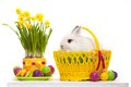 Funny little rabbit among easter eggs in basket greeting card with bunny isolated on white background Stock Photo