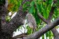 A funny looking bird at Corroboree Billabong, Australia