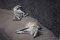 Funny mongrel sleeping dogs dead Stock Photos
