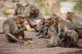 Funny monkey family Royalty Free Stock Photo