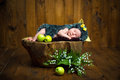 Funny newborn little baby girl in a costume of hedgehog sleeping sweetly on the stump Royalty Free Stock Photo