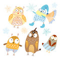 Funny Owls Stock Photos