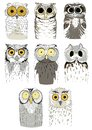 Funny owls on a white background