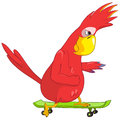 Funny Parrot. Skateboarding Royalty Free Stock Photo