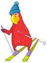 Funny Parrot. Skiing. Stock Images