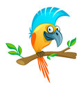 Funny parrot on a white background Royalty Free Stock Images