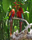 Funny parrots colorful from bali jungles Royalty Free Stock Images