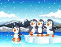 Funny penguins with ice sky landscape background Royalty Free Stock Photo