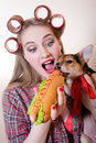 Funny pinup small cute dog & beautiful blond sexy young woman with curlers looking surprised having fun eating a hot-dog Royalty Free Stock Photo