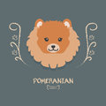 Funny pomeranian vector illustration. Cute cartoon portrait of a dog.